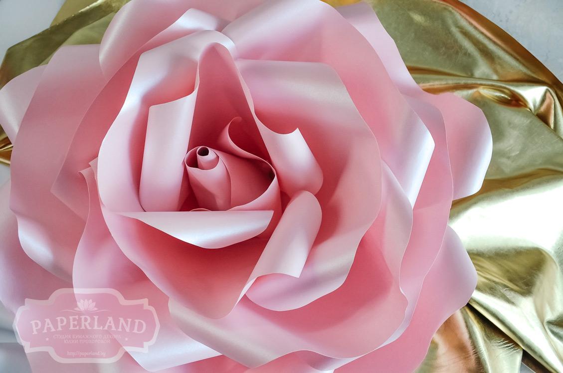 Розы розового цвета