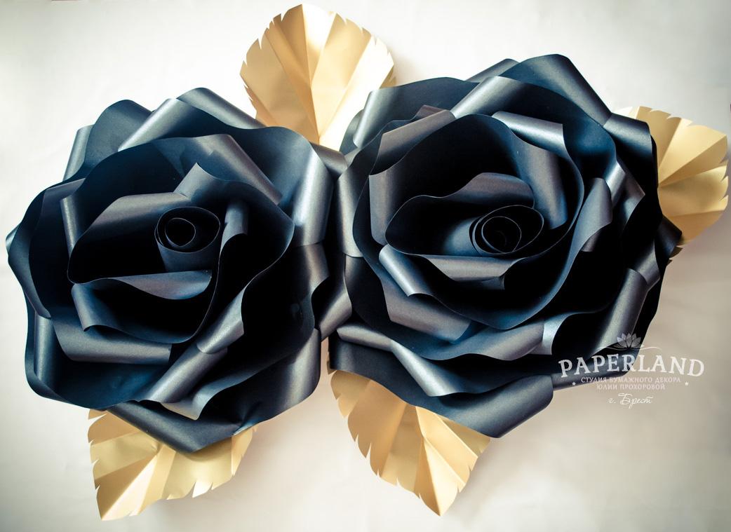 Фото цветов черные розы