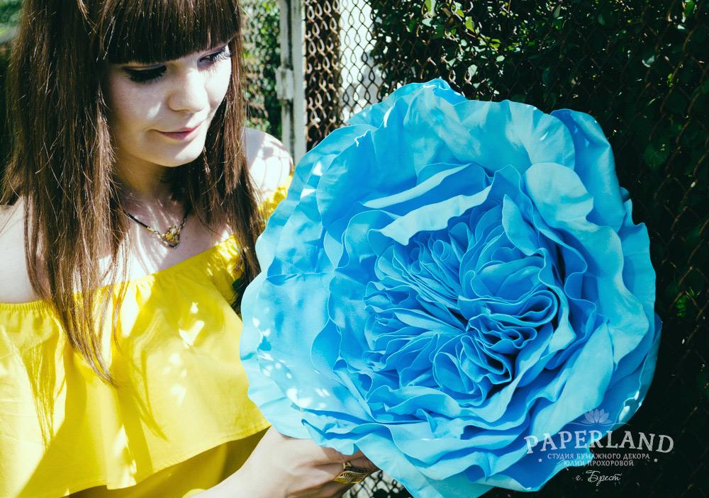 Синие пионовидные розы