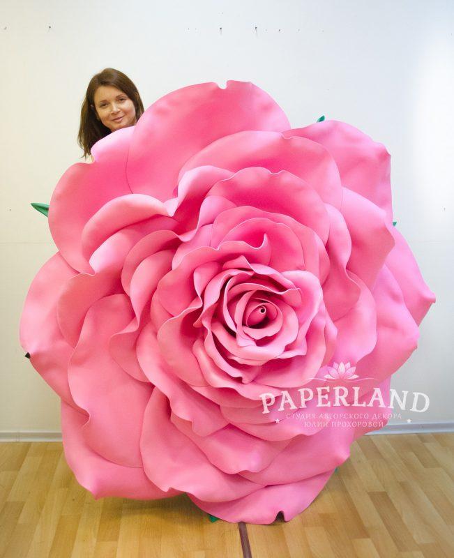 Мегагигантская роза. Цветы Юлии Прохоровой