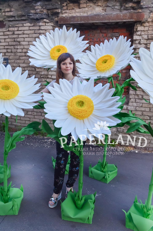 На ромашковом поле!.. Цветы студии PaperLand